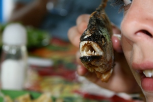 Feasting on piranha caught in Parque Nacional de Anavilhanas